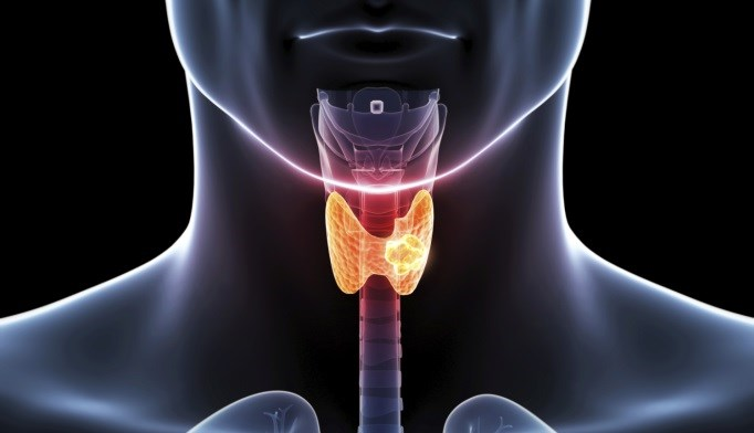 Obesity May Raise Thyroid Cancer Risk