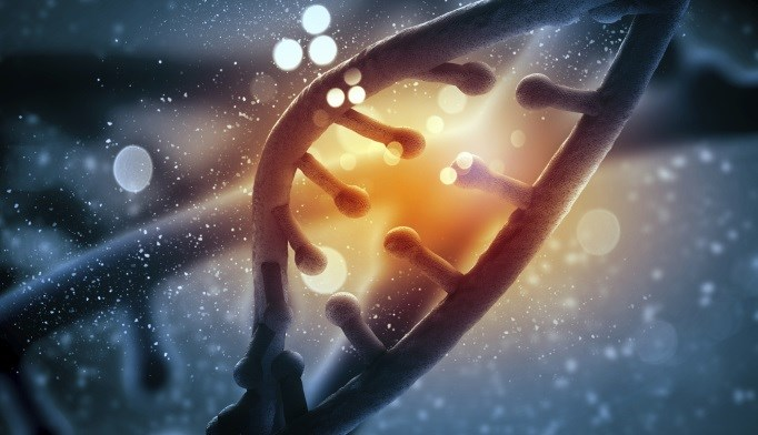 Vitamin D-Related Gene May Boost Benefit of Higher-Protein Diet in Type 2 Diabetes