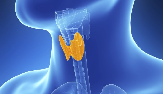 Study Identifies Risk Estimates for Occult Nodal Disease After Thyroidectomy