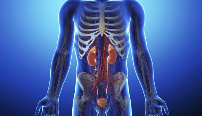 Metabolic Conditions Linked to Lower Urinary Tract Symptoms