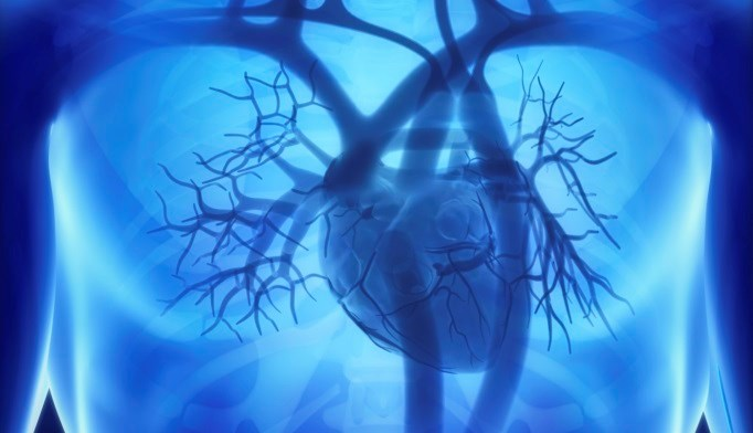 Type 1 diabetes patients taking metformin may experience improved cardiovascular health.
