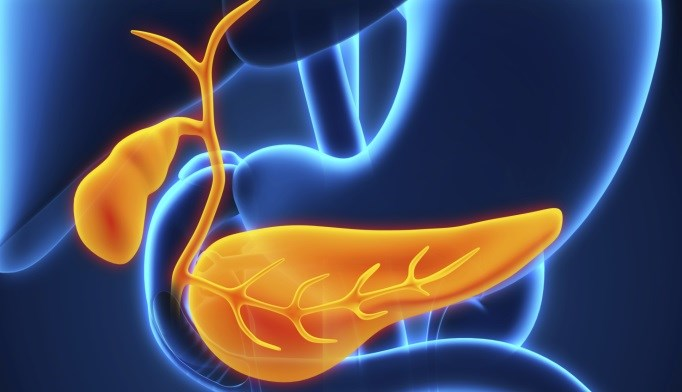 Preclinical Study Looks for T2D Links to Pancreas Protein