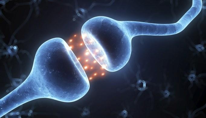 A mouse study shows that neuronal growth hormone secretagogue receptor is a regulator of energy metabolism.