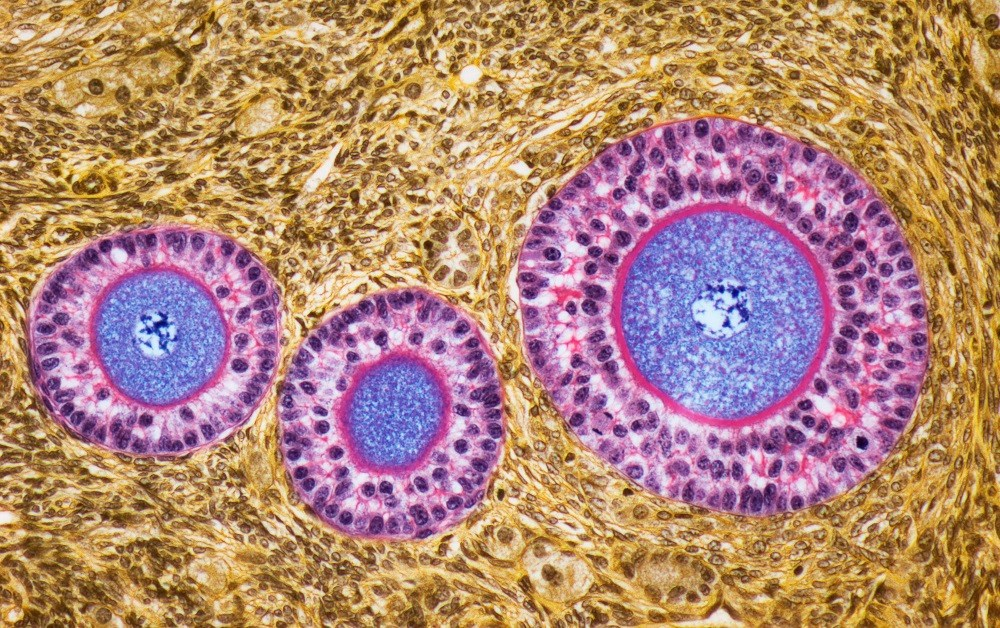 Ovarian Reserve Biomarkers Not Indicative of Reduced Fertility