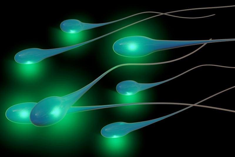 Obesity Linked to Low Sperm Quality, Semen Volume