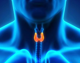 Thyroid-Gland-CME-Image-Final