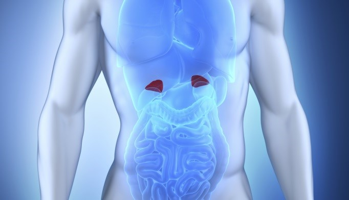 Chronocort Effective in Adults with Congenital Adrenal Hyperplasia