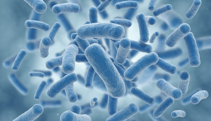 Genes Affect Gut Bacteria That Determines Body Weight