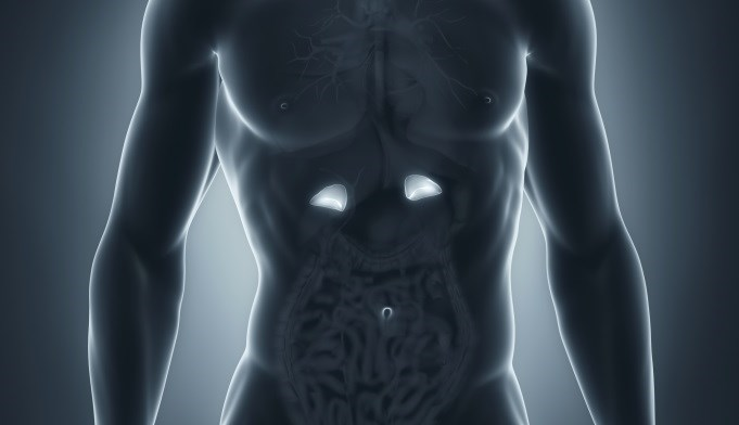 Higher Aldosterone Linked to Increased Parathyroid Hormone Levels