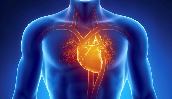 The risk for subclinical heart disease appears to be higher in adult survivors of childhood cancer.