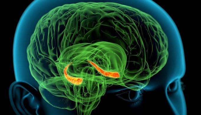 Congenital hypothyroidism may disturb hippocampal associative binding mechanism.