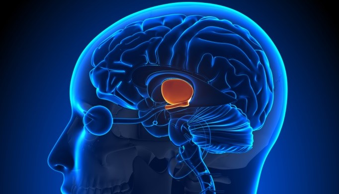 Hypothalamic Gliosis May Be Associated With Insulin Resistance, Obesity