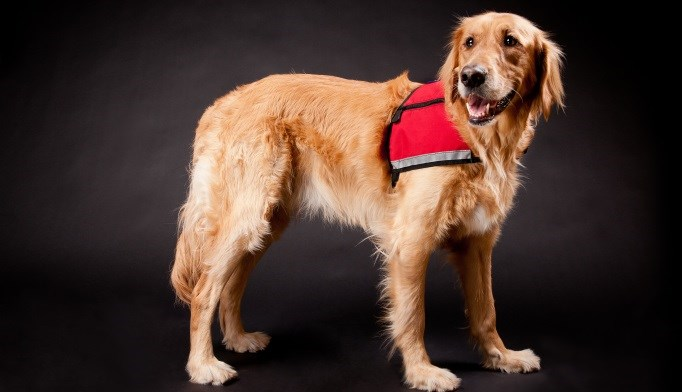 Mixed Results Found for Use of Trained Dogs to Detect Hypoglycemia