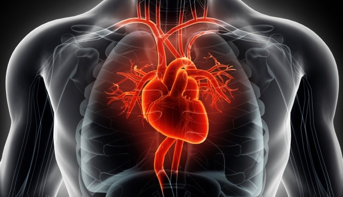 Researchers evaluated the safety-related outcomes, including cardiovascular events, in zoledronic acid.