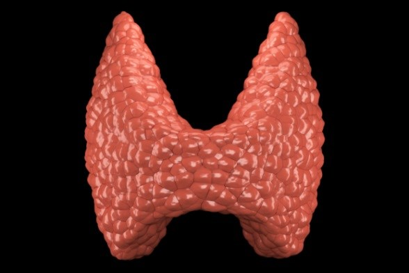 American Thyroid Association: Revised Guidelines for Hyperthyroidism, Thyrotoxicosis