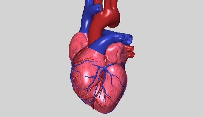 Over 18% of patients who were overweight and 5.8% of patients considered morbidly obese did not have any cardiometabolic risk factors present.