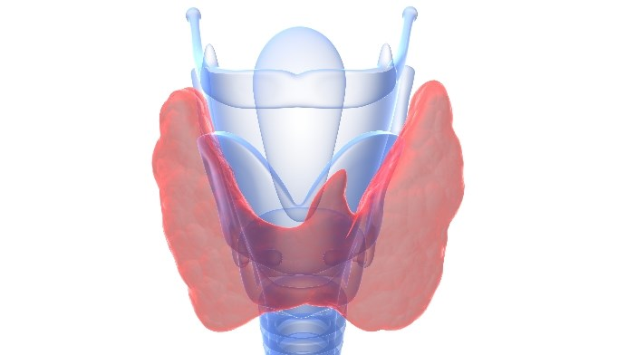 Meta-analysis reveals a lower risk of recurrence and persistence of SHPT when total parathyoidectomy is performed without transplanting parathyroid tissue.