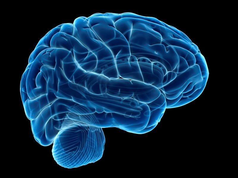 Brain Glucose Levels Blunted During Hyperglycemia in T2D and Obesity