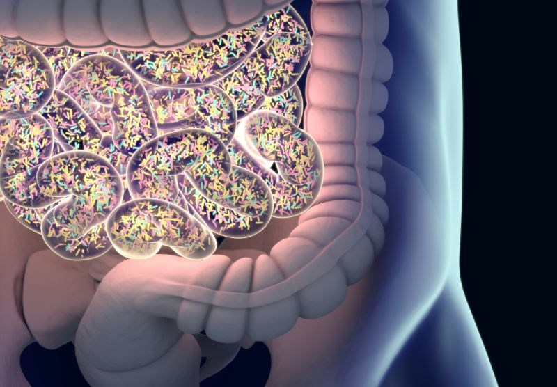 Birth Mode, Gut Microbiota May Contribute to Intergenerational Transmission of Being Overweight
