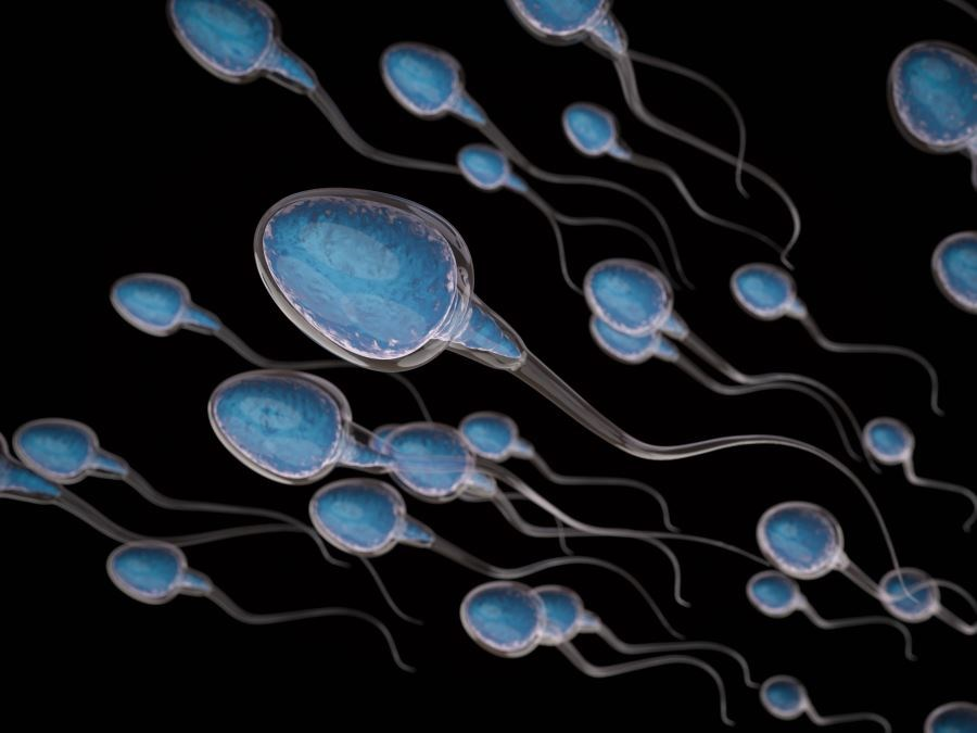 Low Sperm Count Linked to Poor Metabolic, Cardiovascular, Bone Health