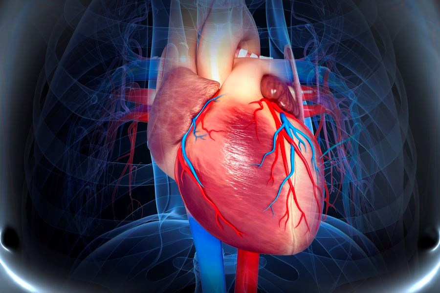 Effect of High Androgen Levels on Cardiovascular Risk in Postmenopausal Women