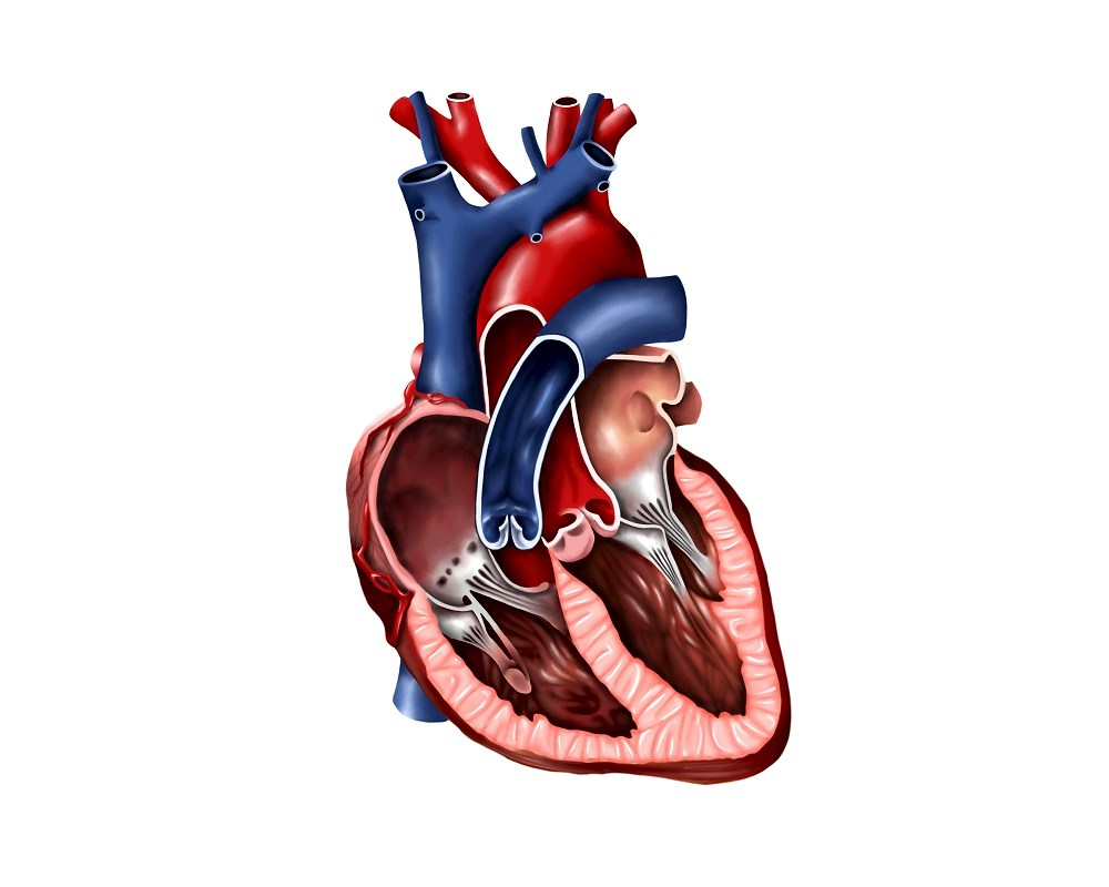Effect of Menopausal Hormone Therapy on Cardiac Structure, Function
