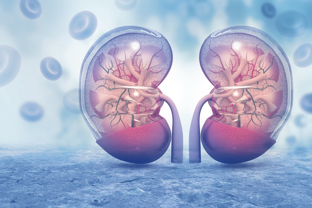 More Rapid Decline in Kidney Function for Diagnosed Diabetes