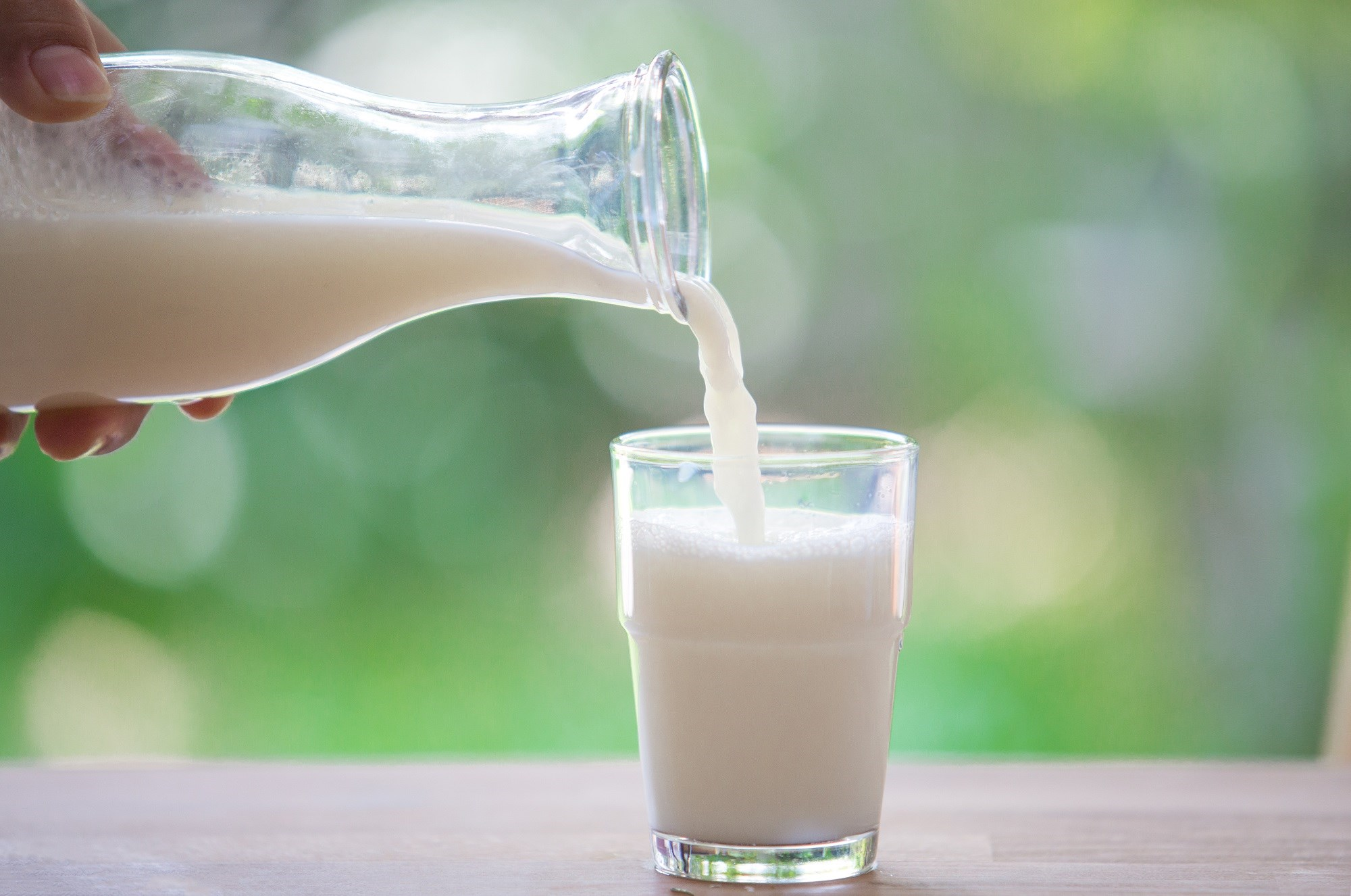 No Evidence for Milk Increasing Mucus Production From Lungs